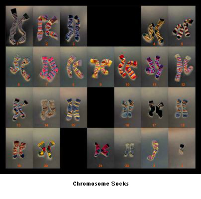 Chromosome Socks